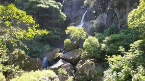 在森林中部的暗藏的瀑布  免版税库存图片