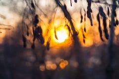 在森林的背景的美好的日落 库存照片