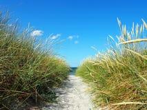 在沙丘的道路在波罗的海 免版税图库摄影