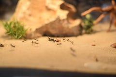 在沙子的蚂蚁 免版税库存照片