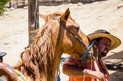 在海滩的紧的马 免版税图库摄影
