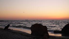 在海的美好的桃红色日落日出,完全安静,飞行海鸥 影视素材