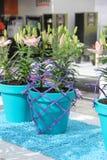 在浅兰的罐的嫩美好的桃红色百合花构成和在春天的紫罗兰色设计网在库肯霍夫 免版税库存照片