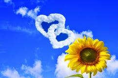 在清楚的天空背景的美丽的黄色向日葵 库存照片