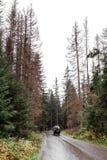 在湿柏油路的推车在森林里秋天 Morske Oko,波兰,欧洲 免版税库存照片