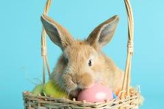 在柳条筐的可爱的毛茸的复活节兔子用在颜色背景的被洗染的鸡蛋 免版税库存图片