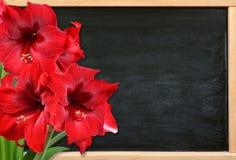 在木书桌上的红色孤挺花花 免版税图库摄影