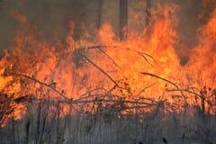 在控制下的森林火灾烧伤 免版税库存图片