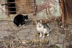 在房子附近的两只黑白小猫 库存图片