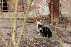 在房子附近的两只黑白小猫 图库摄影
