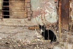 在房子附近的两只黑白小猫 免版税库存照片