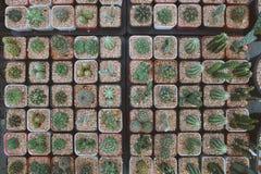 在方形的形状的罐,在罐投入了许多仙人掌植物 免版税库存图片