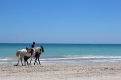 在离开的岸是有两匹马的一个人 库存照片