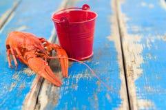 在空的小红色金属桶附近的唯一整个红色煮沸的小龙虾 库存图片