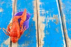 在空的紫罗兰色金属桶附近的唯一整个红色煮沸的小龙虾 免版税库存照片