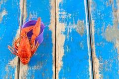 在空的紫罗兰色金属桶附近的唯一整个红色煮沸的小龙虾 免版税库存图片