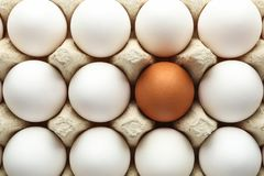在纸盒箱子的鸡鸡蛋作为背景 库存图片