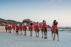 在缆绳海滩的人乘坐的骆驼在一个美好的夏天晚上 库存照片