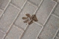 在石头的湿狗足迹 免版税库存照片