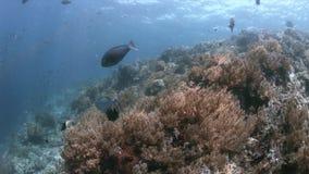 在王侯Ampat,印度尼西亚4k的珊瑚礁 股票视频