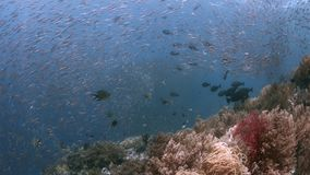 在王侯Ampat,印度尼西亚4k的珊瑚礁 股票录像