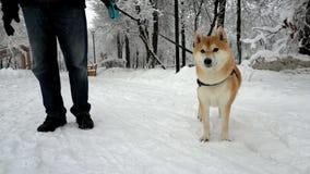 在照相机后的狗奔跑 枪口接近 在背景中是一个多雪的公园 股票录像