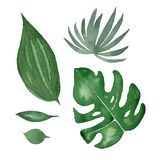 在白色背景隔绝的水彩热带绿色叶子集合 皇族释放例证