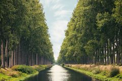 在西弗拉芒省比利时省的达默运河在夏天 免版税库存图片