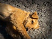 在路的小被放弃的狗 免版税库存图片