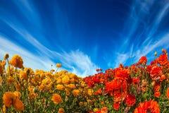 在花卉辉煌的轻的云彩 免版税库存图片