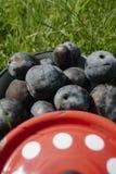 在蓝色罐的有机李子有红色盖子的 免版税库存图片