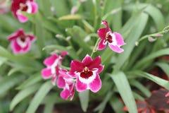 在自然后面地面的兰科花 图库摄影