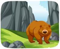 在自然场面的一头北美灰熊 库存例证