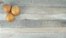 在自然木背景的布朗鸡 免版税库存照片