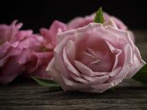 在老木地板上的桃红色玫瑰 免版税图库摄影