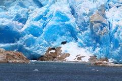 在贝尔纳多奥伊金斯国家公园内的Tempano冰川在智利 免版税库存图片