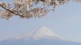 在风的樱花与富士山 影视素材