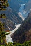 在黄石的大峡谷的更低的秋天 免版税库存照片