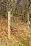 在阿巴拉契亚足迹的白色火焰- 2 免版税库存图片