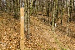 在阿巴拉契亚足迹的白色火焰- 3 库存图片