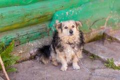 在链子的狗在房子附近 免版税图库摄影