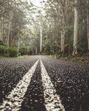 在雨林的路 免版税库存照片