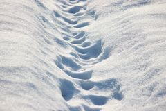 在雪的两人的步在一好日子,在新近地下落的雪的冷淡的步行 雪亮光在阳光下在一冷淡的天 免版税库存照片