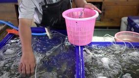 在fishmarket的海鲜新鲜的海鲜 卖主投入新鲜的虾 股票录像