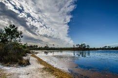 在Gator湖的对比 库存照片