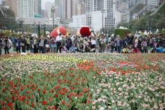 在hk花展的flowe床显示2019年 库存照片