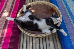 在khantoke,作为饭桌木器物使用一的一只睡觉black&white猫在泰国北部 免版税图库摄影
