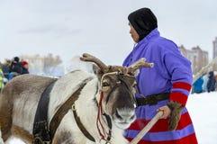 """地方土人- Khanty,三头鹿,冬天驯鹿雪橇,""""Seeing winter†节日 免版税库存图片"""