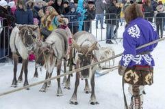 """地方土人- Khanty,三头鹿,雪橇,冬天驯鹿雪橇的乘驾孩子,""""Seeing winter†节日 图库摄影"""