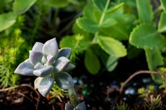 土填装了包含多汁植物的罐 免版税图库摄影